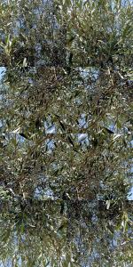 papier peint naturel richard hortiz photo nimes
